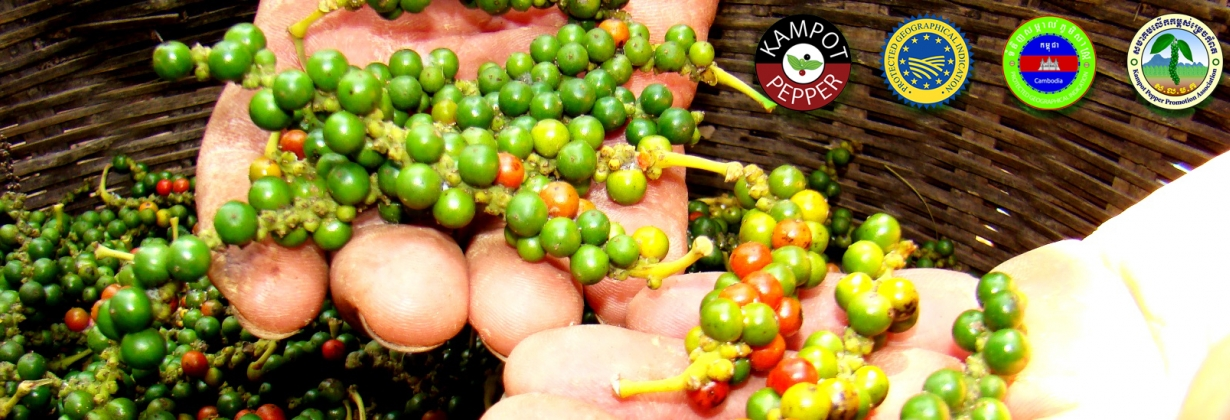Kampot pepper raw materials