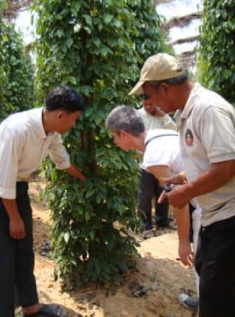 """Mission of """"Syndicat of GI Espelette Chili"""" in Cambodia to exchange experiences with KPPA"""